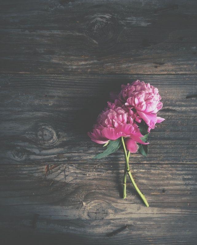 Best 25 Flower Desktop Wallpaper Ideas On Pinterest: 17 Best Ideas About Cute Flower Wallpapers On Pinterest
