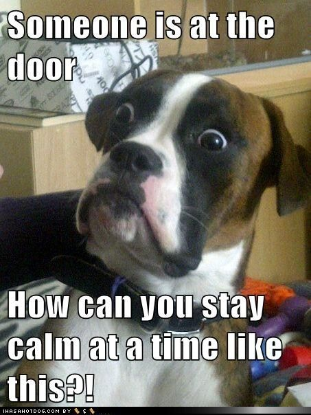 Ha!: Animals, Dogs, Boxer, Funny Stuff, Humor, Funnies, Funny Animal