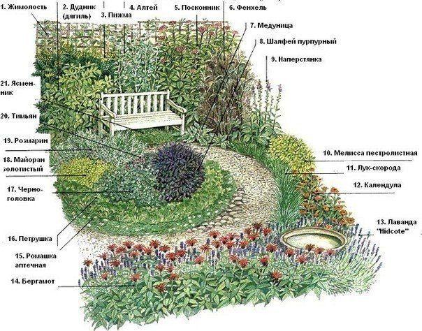 Схема сада с лечебными травами.