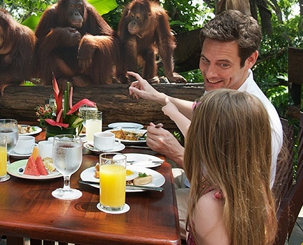 Having breakfast with the Orangutans at Singapore Zoo