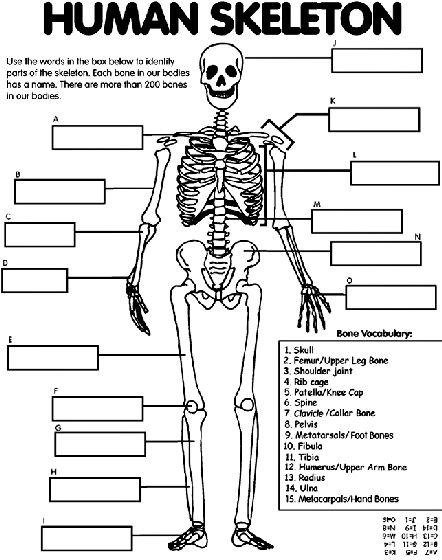 25  best ideas about skeleton labeled on pinterest