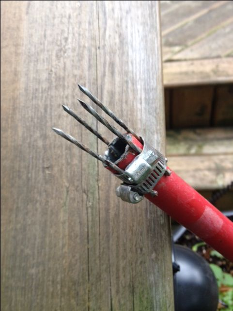 If you have a bad back after picking up fallen fruit from trees, Take a long pole, 4 nails and 2 hose clamps. Hold nails with hose clamps as shown!  Works GREAT and is almost FUN to pickup fallen fruit...Be Careful as it is Dangerous!