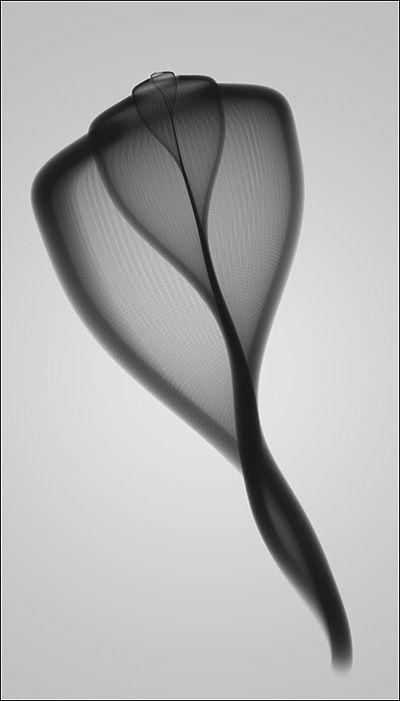 flasd:  Xray of a shell.