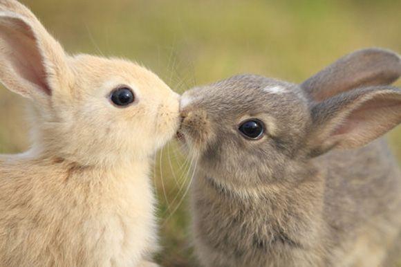 Kiss: Rabbit, Animals, Sweet, Pet, Adorable, Things, Bunnies, Bunnykiss