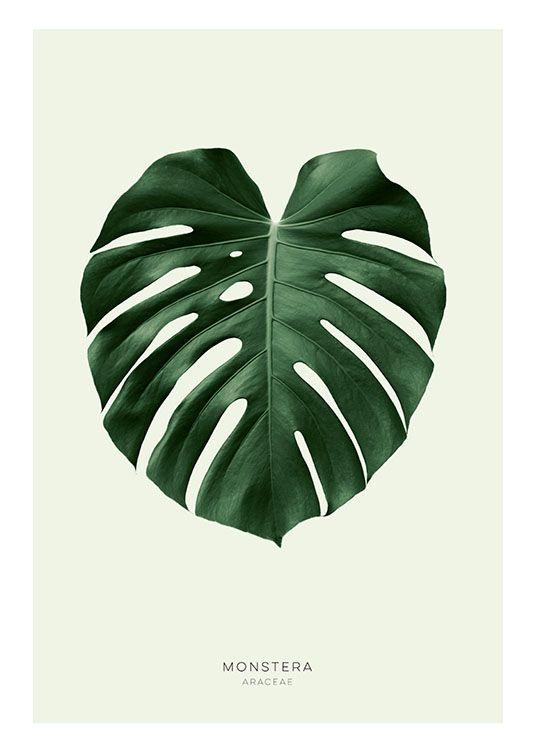 Botanik-Poster und Plakate | Poster mit grünem Monstera-Blatt