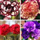 200 pcs carnation seed perennial flower high survival rate mother flower seeds