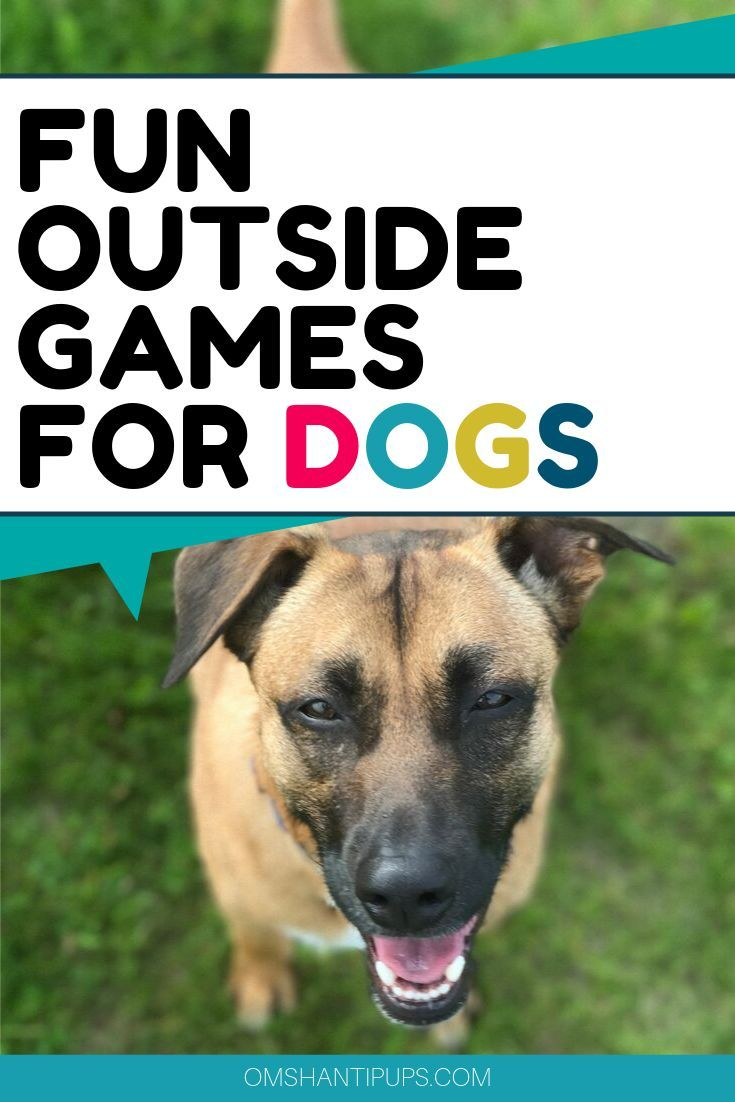 Entertaining Backyard Games To Play With Your Dog Dog Training