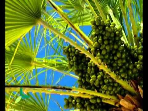 Island Losinj - Fragrances and tastes