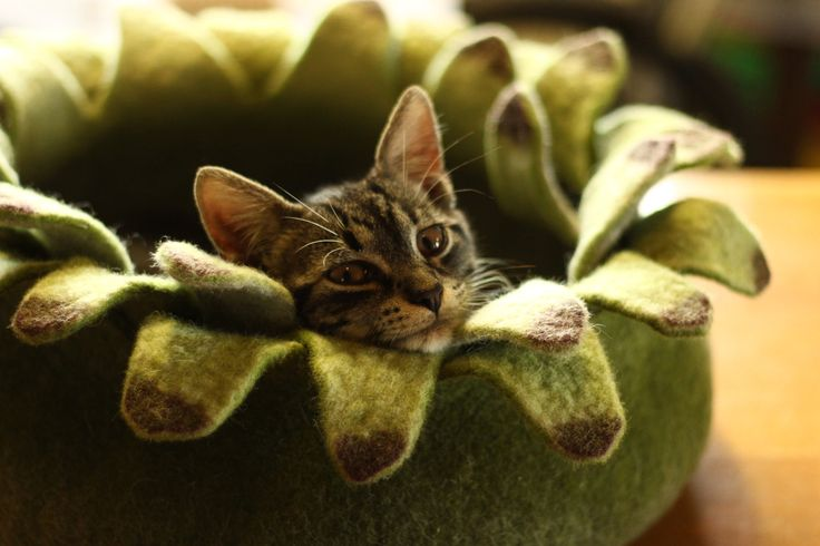 Cat bed/cat house/cat cave/ houseleek felted cat bed.