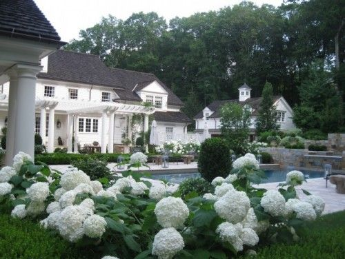 Gorgeous Annabelle Hydrangea accentuate a classic white home and painted garden structures.