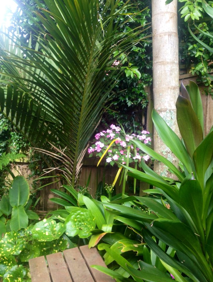 A shady spot planted with ferns and variegated ( yellow spotted ) Ligularia