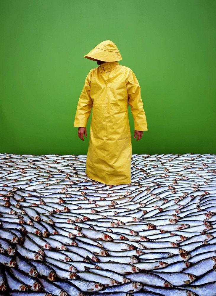 pescado | David Stewart | Photographer | Cabbage