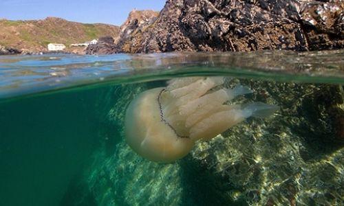 Denizanası çarpılmasına karşı yapılması gerekenler
