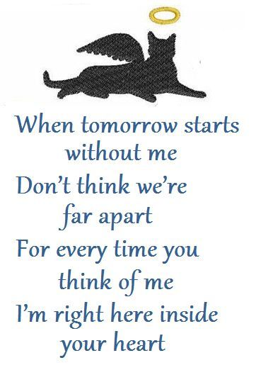 Loss Of A Pet Quote Gorgeous Best 25 Cat Loss Quotes Ideas On Pinterest  Loss Of Cat Quotes