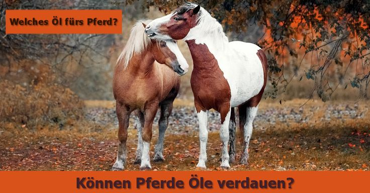 Fachartikel - Welches Öl ist das Richtige fürs Pferd
