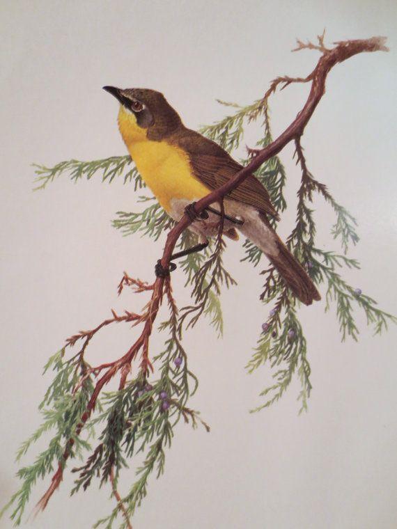 17 meilleures id es propos de peintures d 39 oiseaux sur pinterest oiseau en aquarelle dessins. Black Bedroom Furniture Sets. Home Design Ideas