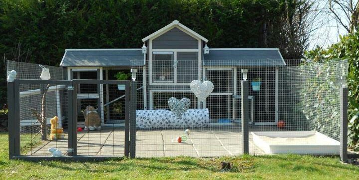 This is fab - even better if the run had a cover. But supervised exercise time would be fine.  www.best4bunny.com
