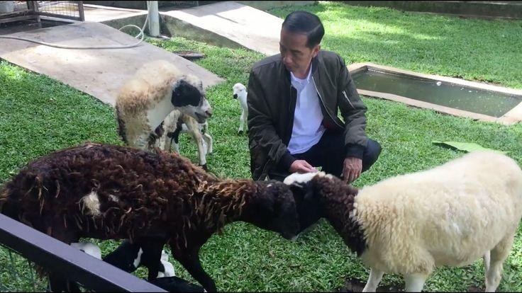 Kabar gembira dari Istana Bogor. Telah lahir dua ekor bayi kambing yang sehat dan lucu, menambah jumlah kambing menjadi sepuluh ekor. Kelahiran adalah rahmat...