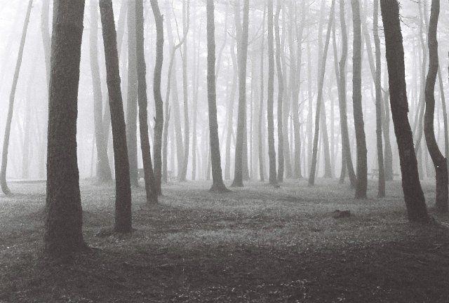 제주도 안개숲