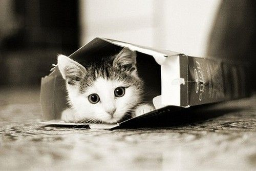 here we have a cute little kitten hidding inside a cereal box. Pretty cute.