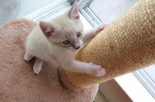 13 rascadores para gatos caseros, ¡y gratis! | EROSKI CONSUMER. Los gatos…
