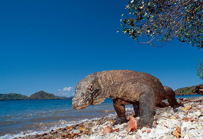 Amazing Best Tourism Komodo Island - Holiday Ideas, Popular Place on Popular Tourism Worlds
