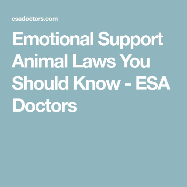 Emotional Support Animal Laws You Should Know - ESA Doctors