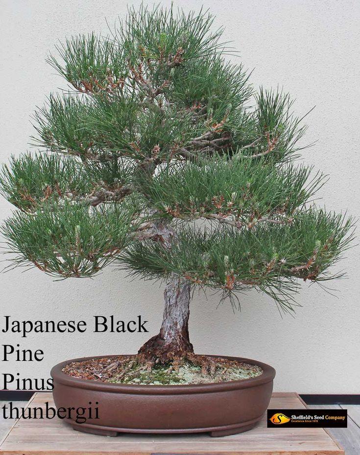 growing bonsai from seed pdf