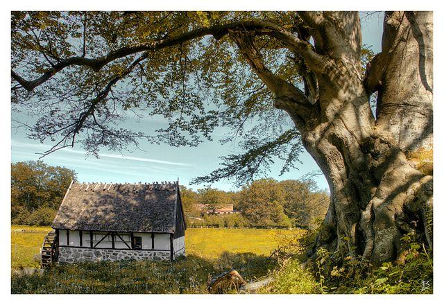 Swedish Countryside | Flickr - Photo Sharing!