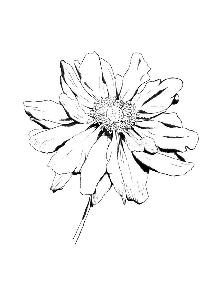 Line Drawing Flowers 15 : Best ideas about flower drawings on pinterest