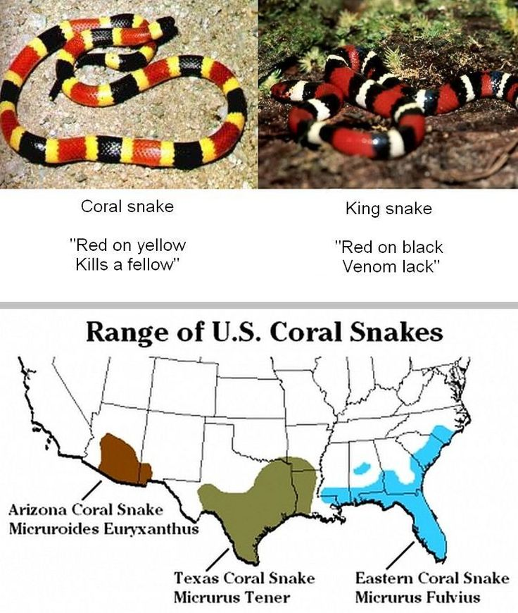 77 Best Images About Snakes Of North America On Pinterest