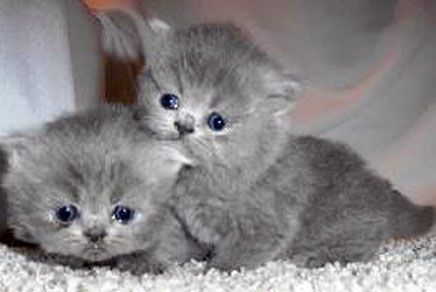 Sad #kittens don't have a gold fishy :(