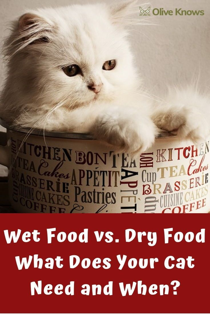 Wet Food Vs Dry Food Cats And Kittens Best Cat Food Cat Nutrition Cat Diet