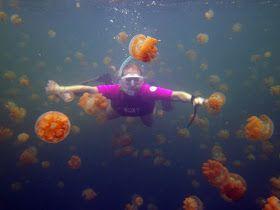 O LAGO DAS ÁGUAS-VIVAS, JELLYFISH LAKE Localizado em uma pequena ilha rochosa na costa de Koror em Palau, o Jellyfish Lake é um dos mais de 70 lagos de água salgada sobre este arquipélago do Pacífico Sul,que um dia já foi ligado ao oceano,mas que hoje são isolados....