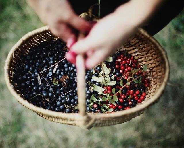 Color of Summer 🌿🍒 Россыпь цветного лета🌿🍒 Хорошего вечера, друзья!🍂