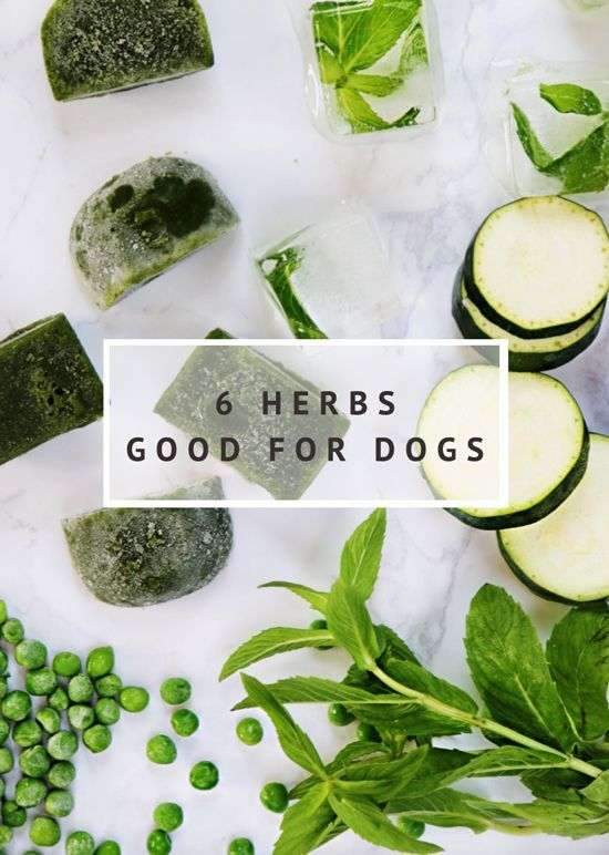 6 Healthy Herbs Good for Dogs - Pretty Fluffy | 6 of the best herbs good for dogs - how they keep your dog healthy and how to include them safely in your dog's diet.