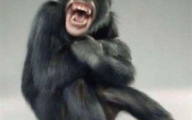 Anche Gli Animali Ridono e Si Divertono? Hanno il Senso Dell'Umorismo? Ecco La Risposta Della Scienza! Un interessante studio pubblicato sulla prestigiosa rivista The Guardian ha messo in evidenza un interessante aspetto degli animali: anche loro hanno il senso dell'umorismo? Stando al video che potet #animali #umorismo #scienza #risate