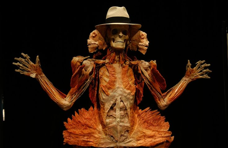 """June 6, 2005: A plastinate specimen at the """"Body Worlds"""" exhibit, the show of plastic-infused bodies, while at the Museum of Science and Ind..."""