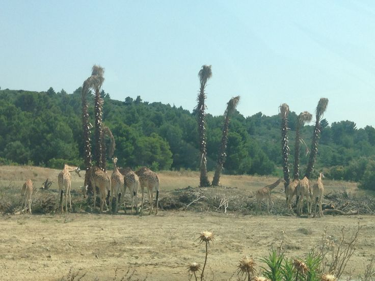 Sigean Zoo drive through. Languedoc.