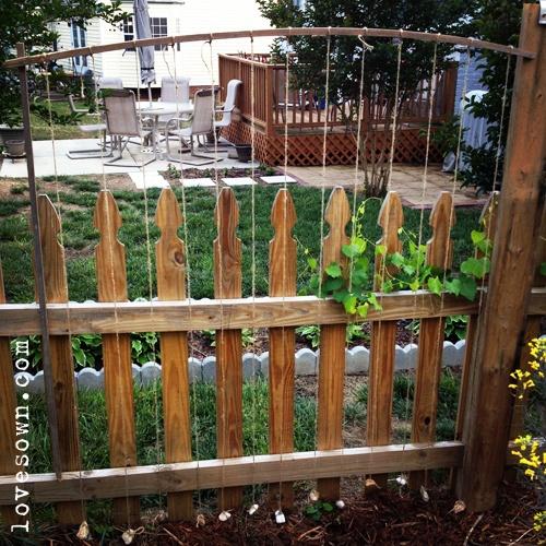 Love Sown: Upcycled String Trellis: Wood Fence, Beans Trellis, Diy Trellis, Beans Variety, Green Beans, Bean Trellis, String Trellis, Mr. Beans, Ivy Trellis