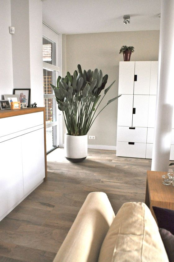 grote plant na STIJLIDEE Interieuradvies en Styling via www.stijlidee.nl