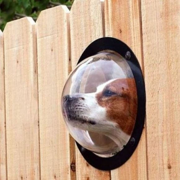 Fence Bubble... funny but brilliant for all curious dogs... they can look out and see everything.