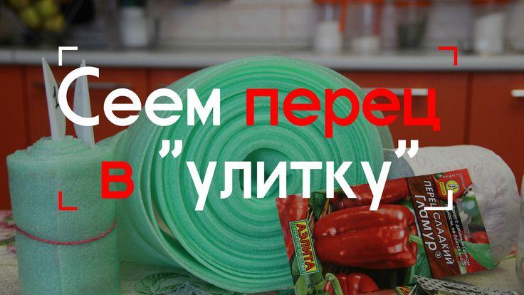 """Сеем перец в """"улитку""""."""