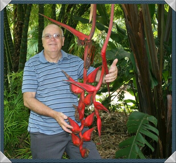 Amongst the Heliconia at Cairns  botanical garden.
