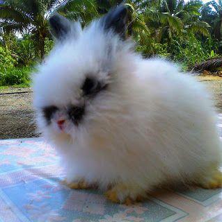 nice teddy bear betina sold hi bunny pinterest teddy bear