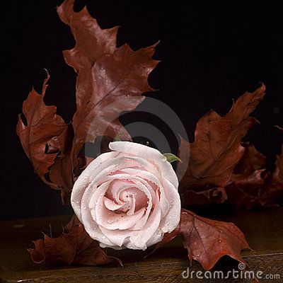 A still life with a pink rose and autumn leaves.