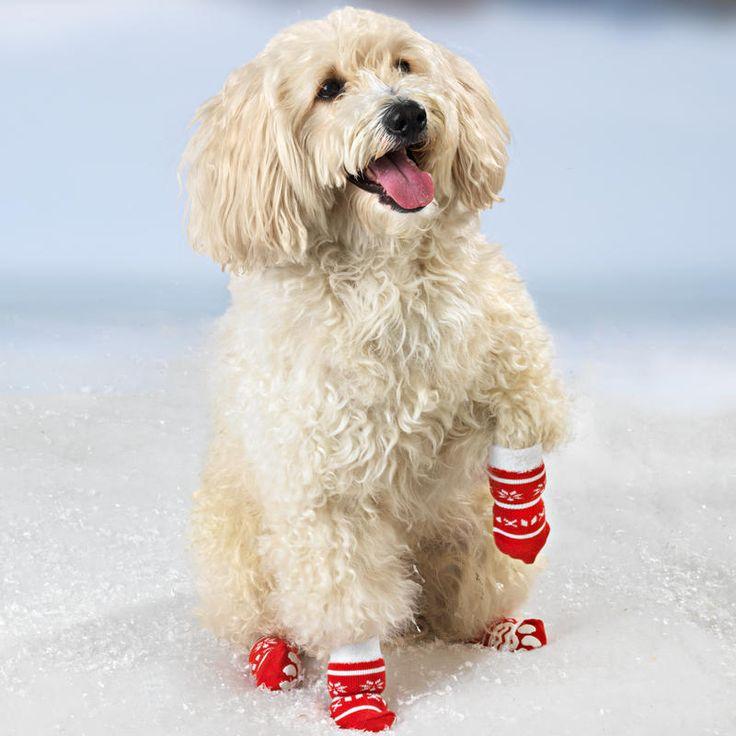 Ponožky pro psy, velké   Magnet 3Pagen #magnet3pagencz #3pagen #animals