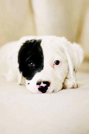 Dogs @KaufmannsPuppy