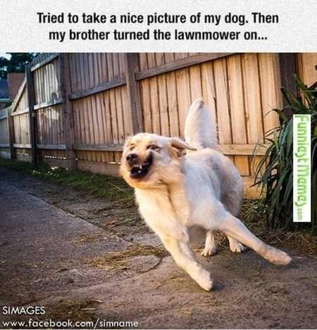 Funny dog faces memes - photo#42