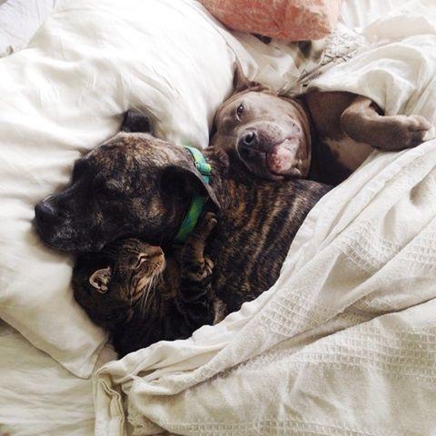 【犬×犬×猫】「君のぬくもりをずっと忘れないように…」仲良し3兄弟がくっつきあってお昼寝しているのには悲しい理由があった